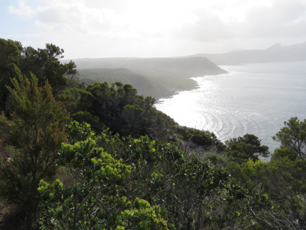 Cape Point 2014 (36)