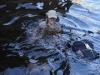 Last swims
