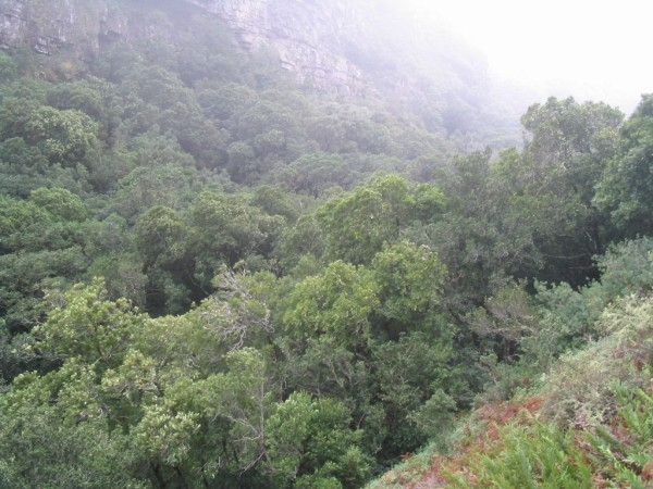 Afro Montane forest