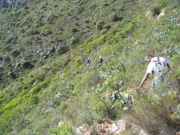 table-mountain-067