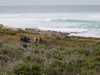 Cape Point 2014 (46)