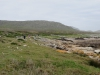 Cape Point 2014 (75)