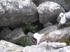table-mountain-063